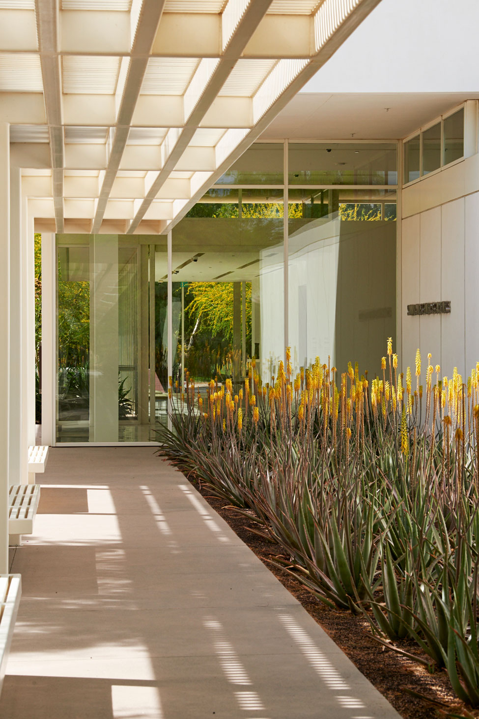 Flowering Medicinal Aloe along a walkway and under a white trellis, facing the entrance of Sunnylands Center.